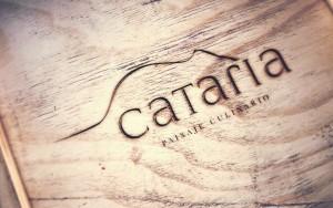 cataria1